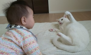 赤ちゃんと猫2